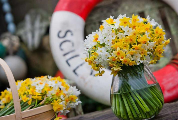 Scented narcissi by post fresh from the Isles of Scilly